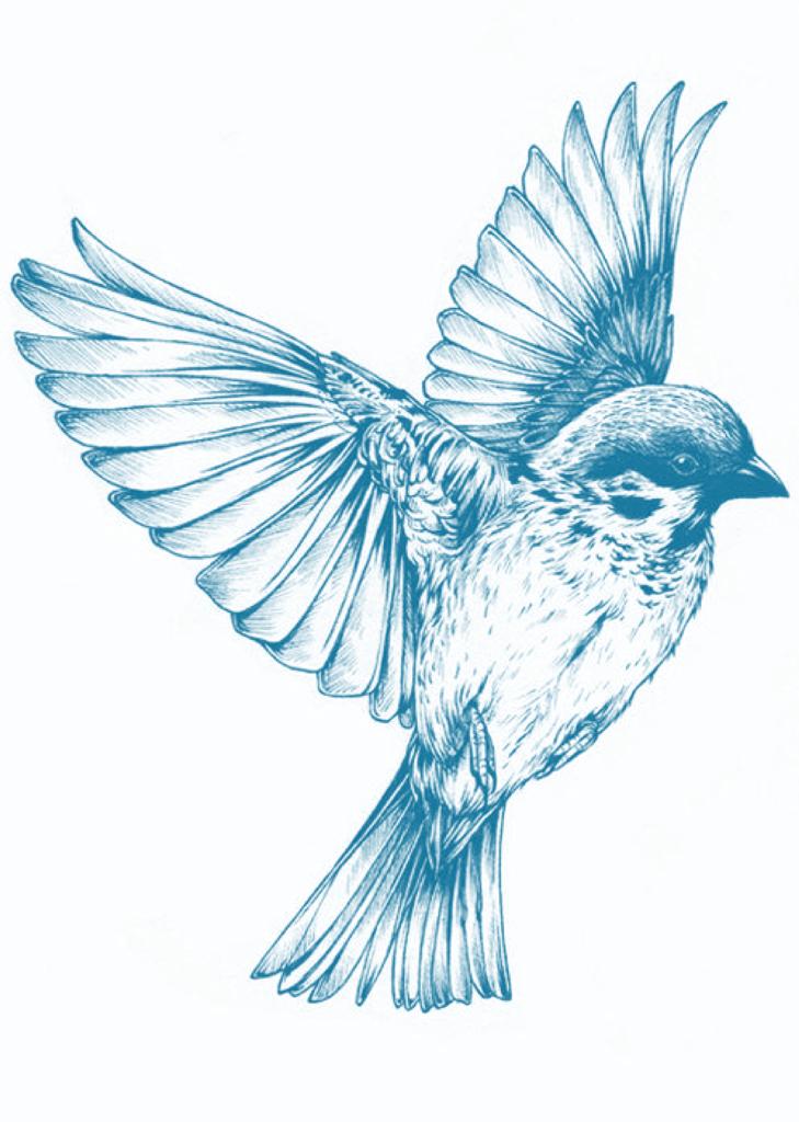 bird 910376 - Suzanne Thiberville, Naturopathe