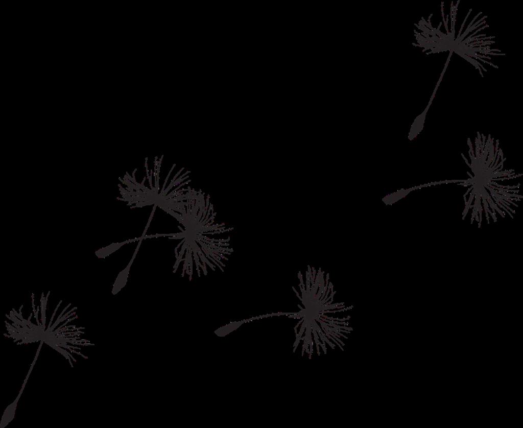 dandelion 335222 1280 - Suzanne Thiberville, Naturopathe