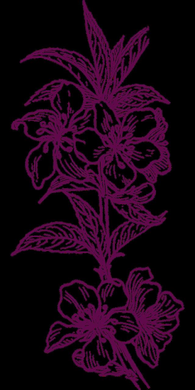 flower 303530 1280 - Suzanne Thiberville, Naturopathe