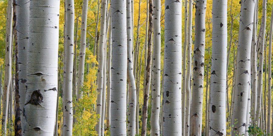 trees 690727 1920 - Suzanne Thiberville, Naturopathe