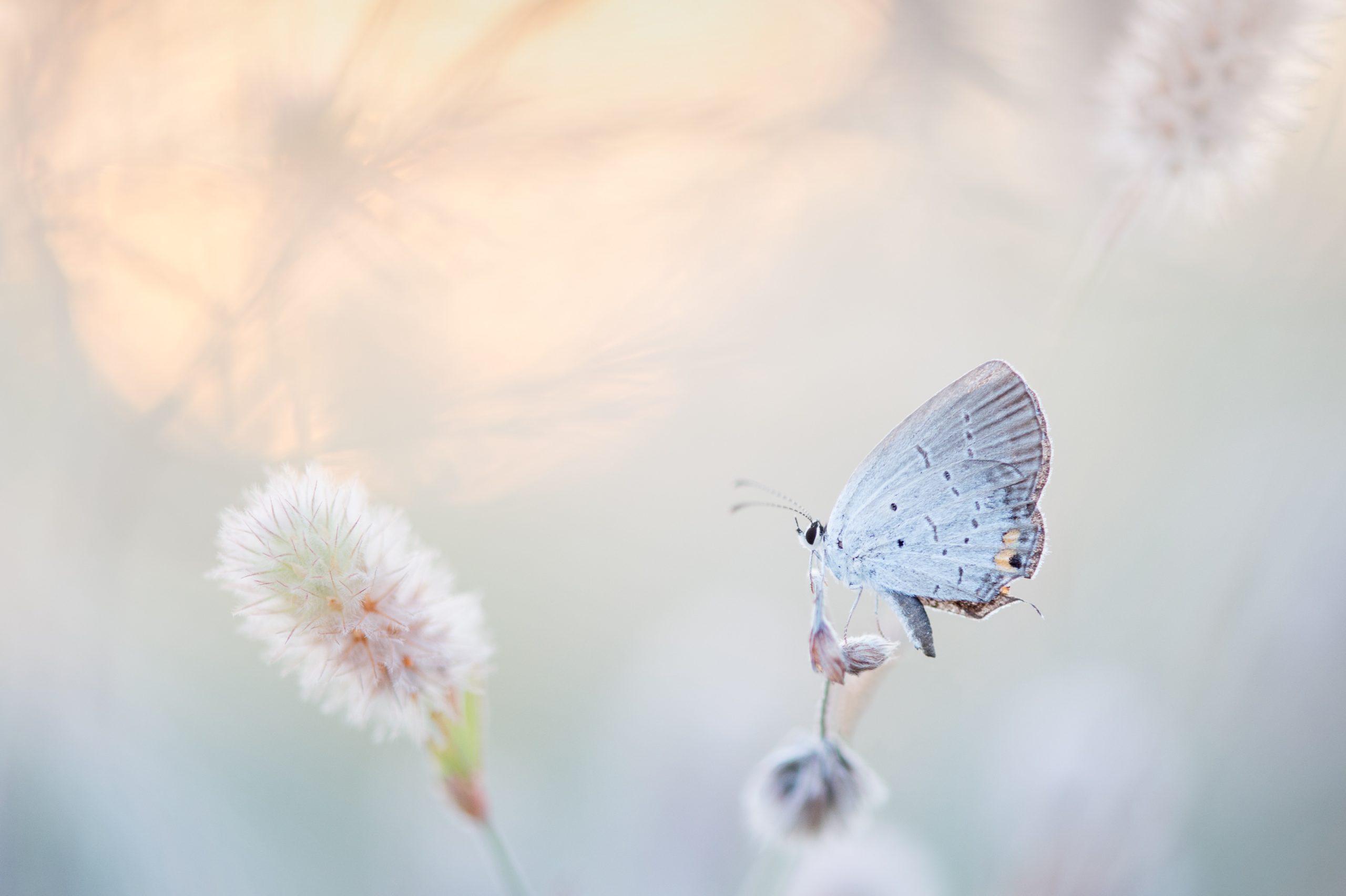 ray hennessy 1263329 unsplash scaled - Suzanne Thiberville, Naturopathe