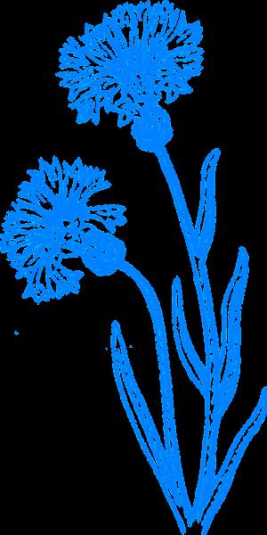 flower-304475_1280